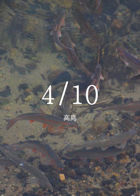 石斑魚(うぐい)の遡上